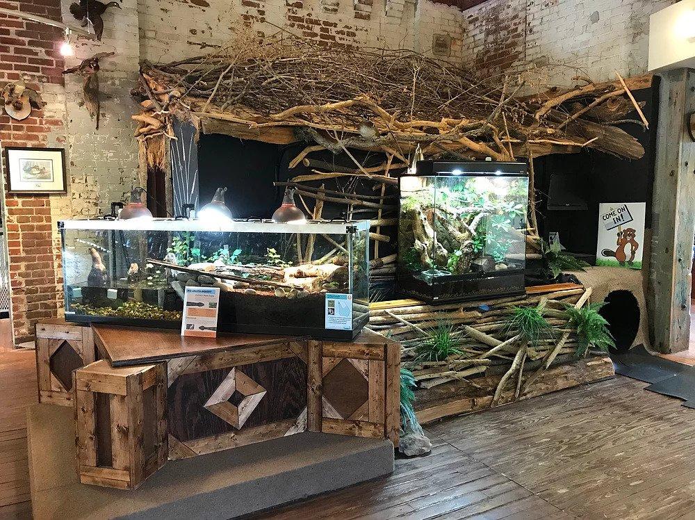 Picture of aquariums
